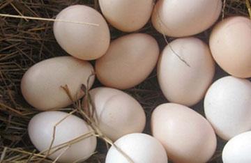散養雞蛋被檢出二噁英